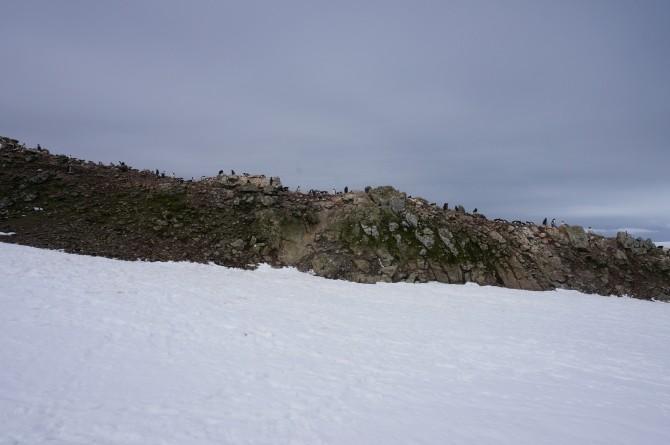 남극특별보호구역으로 지정된 펭귄 서식지가 세종기지 근처에 있다. 아스파 지역 돌 언덕 위의 펭귄들이 멀리서 보인다 - 전현정 제공